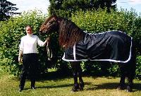 Horse Blue Rug