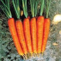 Carrots - Red Long