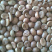 Robusta Green Coffee Bean