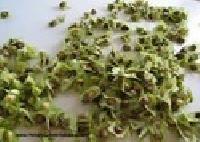 Malunggay Seed