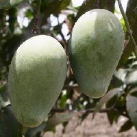 Langda Mangoes