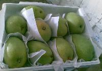 banganpali mango