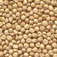 Sorghum Seed,agro Seeds