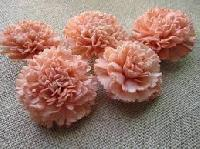 Sola Carnations
