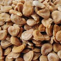 Datura Seeds, Datura Stramonium