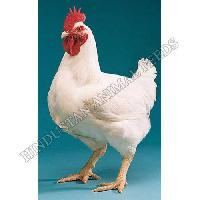 Broiler Finisher Poultry Feed