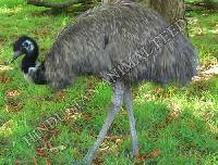 Emu Finisher Feed