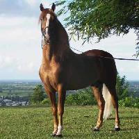 Endurance Horse Feed