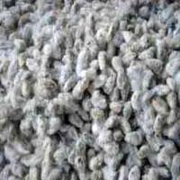 Cotton Seeds