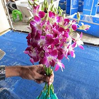 Fresh Cut Orchid Flower