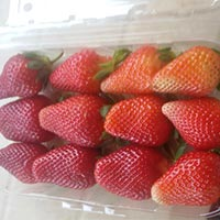 Strawebrry Frozen & Iqf Proccesed Fruits