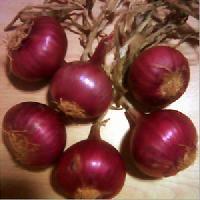 Bangalore Rose Onions
