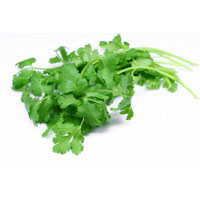 Dehydrate Coriander Leaves