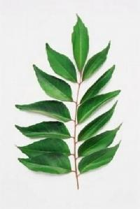 Dehydrate Sweet Curry Leaves