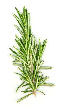 Freeze Dried Rosemary Flakes