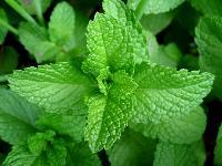 Herbals Leaves