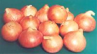 Light Red Onion