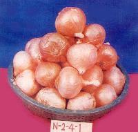 N-2-4-1 Onion