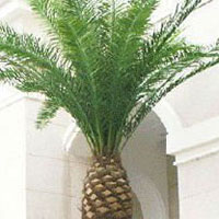 Camouflage Date Palm Tree