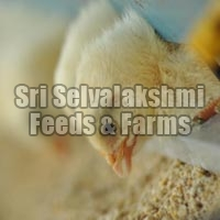 Poultry Feeds - Manufacturer and Wholesale Suppliers,  Tamil Nadu - Sri Selvalakshmi Feeds & Farms