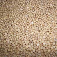 Great Millet Seeds