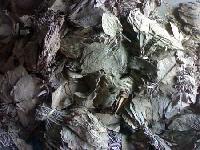 Tobacco Leaves (01)