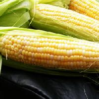 Maize Starch