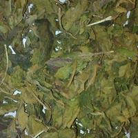 Gudmar Leaves