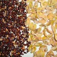 Amla Seeds, Emblica Officinalis