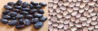 Organic Kaunch Seeds (Organic Mucuna Pruriens)