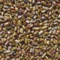 Pawad Seeds (cassia Tora)