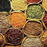 Indian Origin Pulses