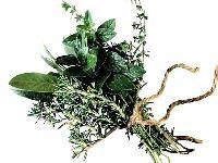 Ayurvedic Plants