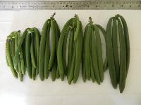 Indian Vanilla Beans
