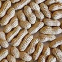 Ground Nut Oil Seeds
