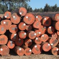 Eucalyptus Wood Logs