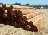 South American Wood Logs