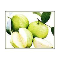 Fresh White Guava