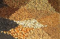 Agro Seeds