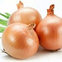 light red onion seeds