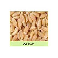 Sortex Wheat