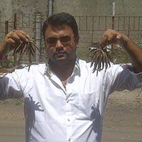 Safed Musli Seeds