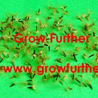 Stevia Seeds
