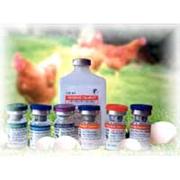Poultry Vaccine