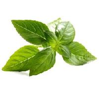 Natural Basil Oil