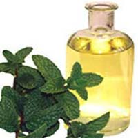 Crude Mentha Oil