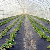 Agriculture Assignment Services