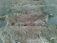 Raw Leather Skin Of Goat And Sheep