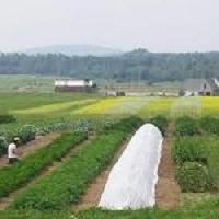 Agriculture Crop Cover