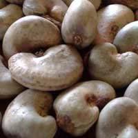 Raw Cashew Nut